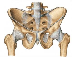 sacrum and ligament 2