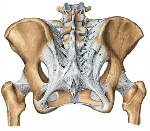 sacrum and ligament
