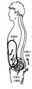 腹膜腔と骨盤臓器